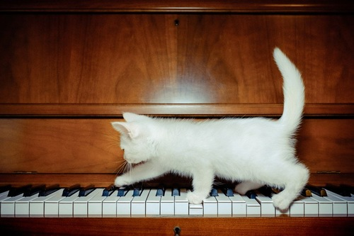 ピアノのうえの猫