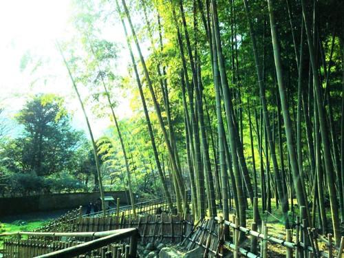 仙厳園の庭園にある竹林