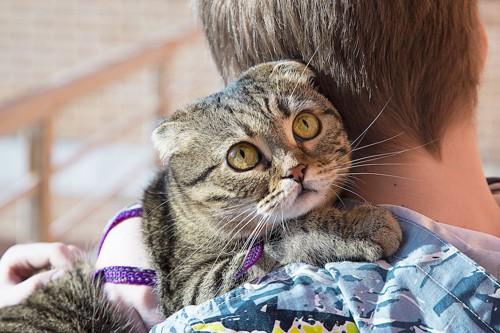 飼い主に抱っこされているリードをつけた猫