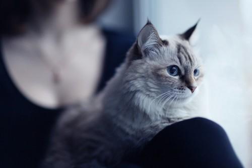 女性の膝に乗る猫