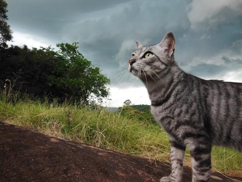 どんよりした雲の下の猫