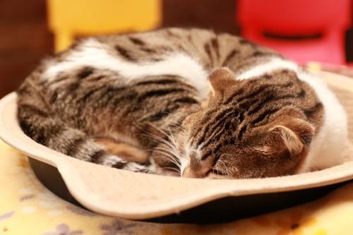 鍋型のベッドに入って眠る猫