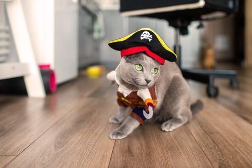 海賊のコスプレをする猫