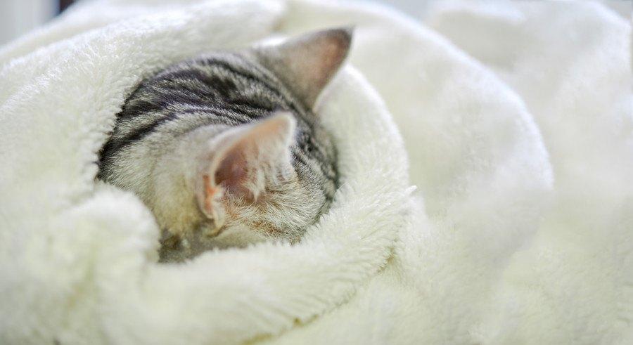 布団で安眠する猫