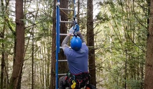 木に登るショーン