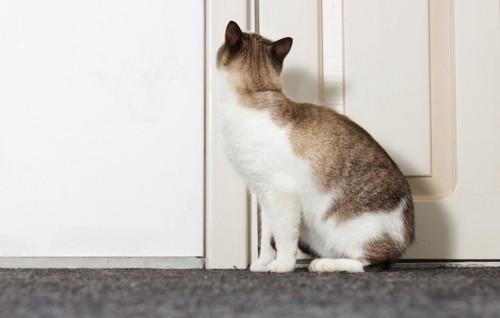 閉まった扉の前に座っている猫