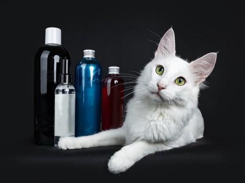白猫と猫専用シャンプー