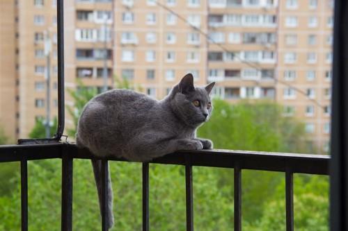 ベランダの柵に乗っている猫