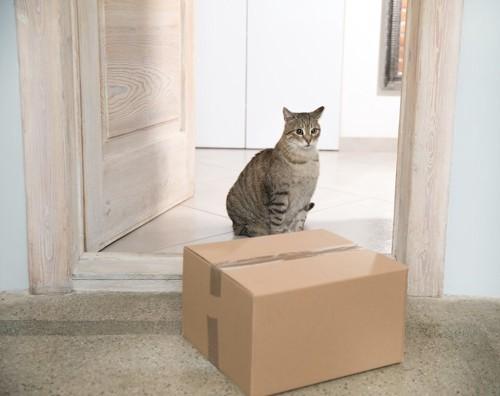 部屋に置かれた段ボール箱の前に座っている猫