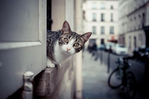 外を観察する猫