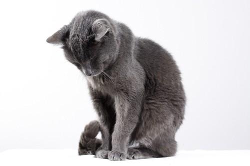 下を向いている猫
