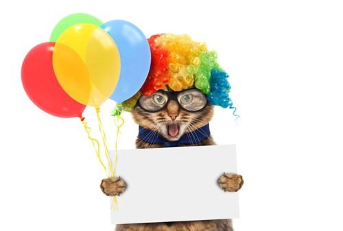 エンターティナーな猫