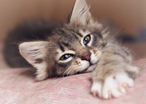 布団で手を伸ばす猫