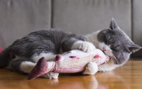 おもちゃを抱えてかじる猫