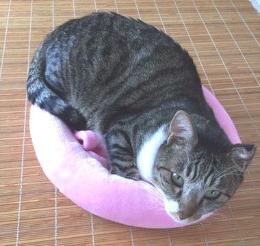成猫がベッドの中に入っている。