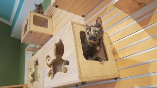 壁のボックスから顔を出すサビ猫