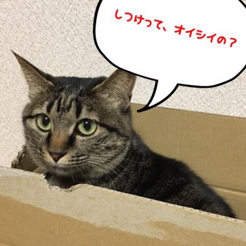 しつけ中の猫
