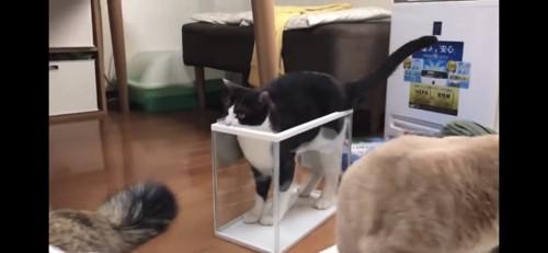 プラケースにフィットする猫
