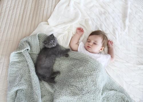 寝ている赤ちゃんのそばで休む子猫