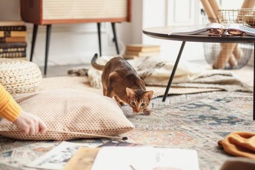 クッションの下のおもちゃを狙う猫
