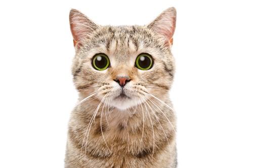 目を大きく開いて見つめる猫