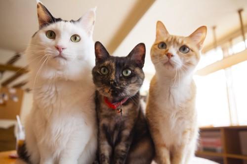 猫カフェの猫達