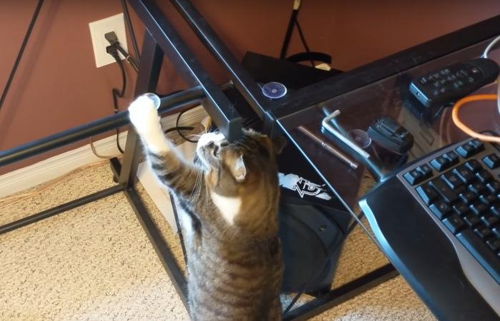 机にタッチする猫