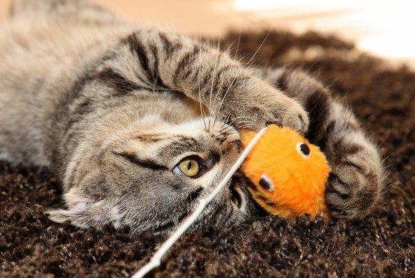 黄色いおもちゃで遊ぶ猫