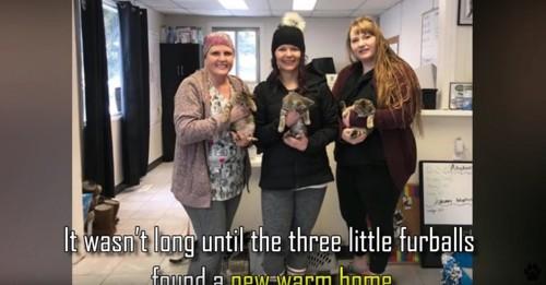 子猫を抱っこする3人の女性