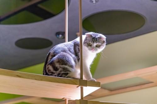 キャットウォークより眺める猫