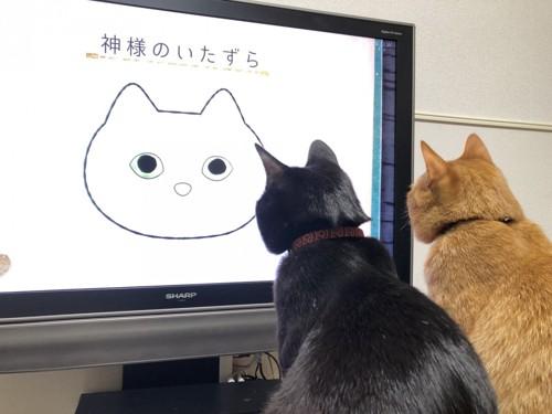 並んでテレビを見る2匹の猫