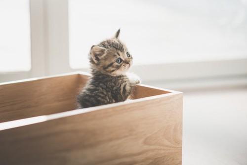木の箱に入っている子猫