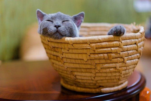 カゴから顔と前足を出す猫の写真