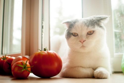 トマトの前に座る猫