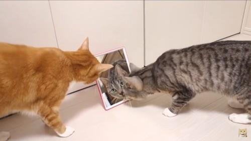鏡をみる二匹