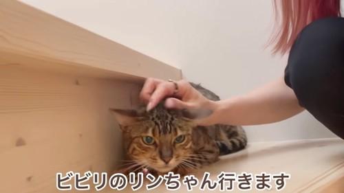 階段で小さくなっている猫