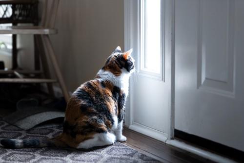 玄関の前で座る猫
