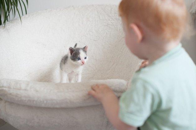 赤ちゃんを見ている生後1週間の子猫