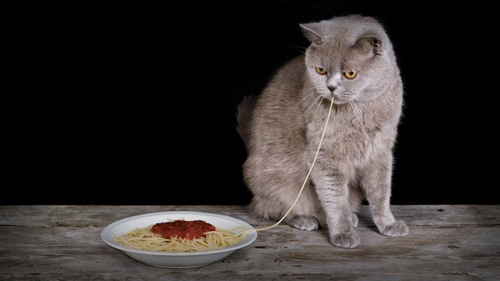 パスタを食べる猫