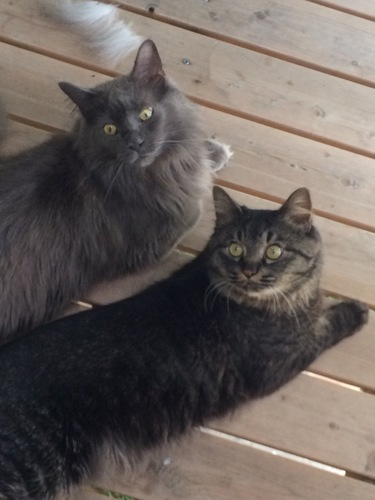 先住猫ブーフィー(左)と仲良く日光浴