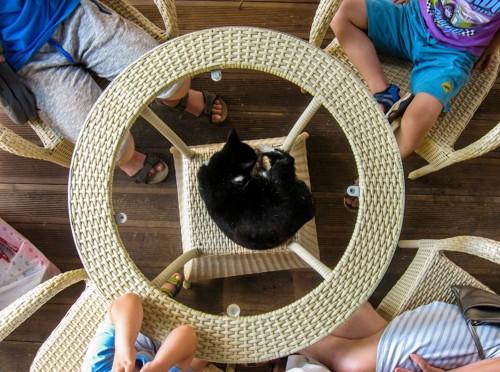 ガラステーブルの上で人間に囲まれる猫