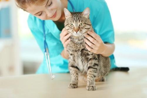 診察される猫