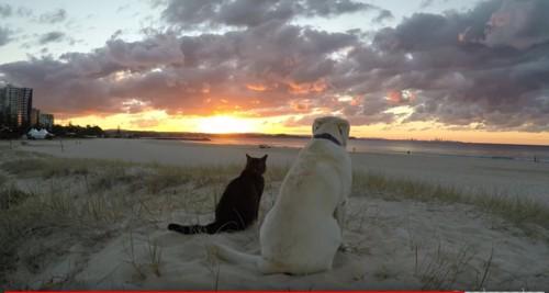 夕日と猫と犬