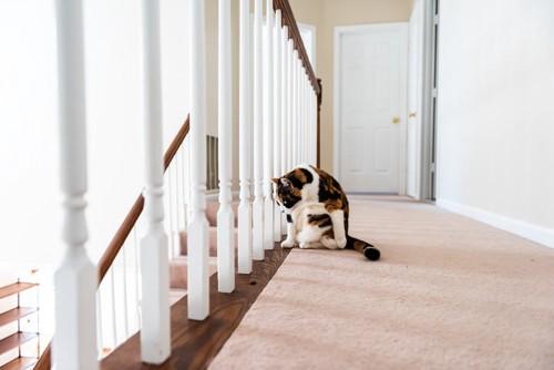 階段に隠れる猫