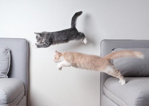 ジャンプで飛び移る2匹の猫