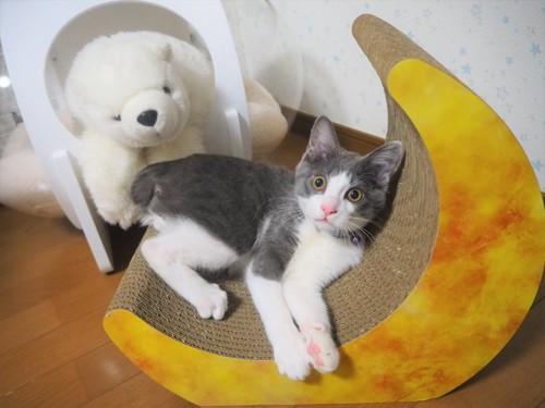 月の爪とぎベッドに寝る猫