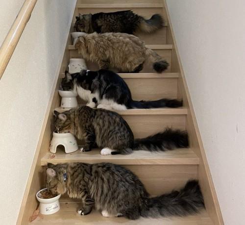 猫さん大集合で食事