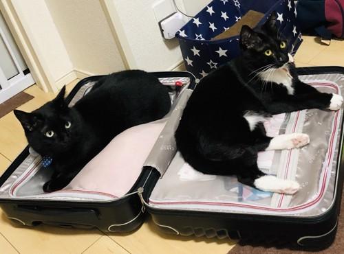 スーツケースの上に猫が乗ってる写真