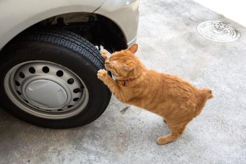 車のタイヤで爪を研ぐ猫