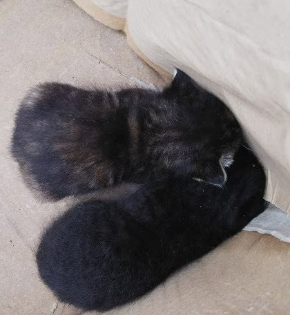 段ボールに捨てられている猫